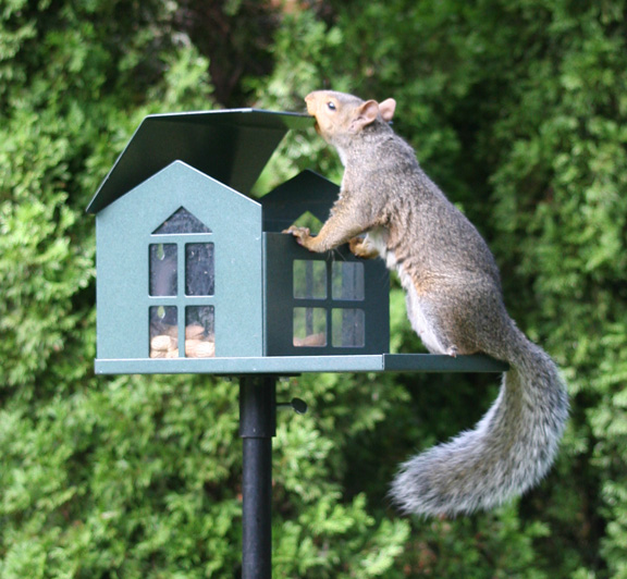SQF1G - Bird Proof Squirrel Feeder - USA - Click Image to Close